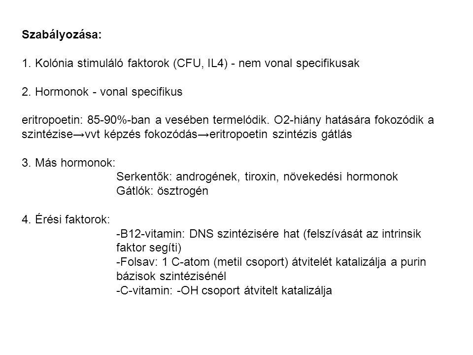 Szabályozása: 1. Kolónia stimuláló faktorok (CFU, IL4) - nem vonal specifikusak 2. Hormonok - vonal specifikus eritropoetin: 85-90%-ban a vesében term