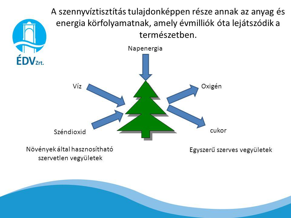 A szennyvíztisztítás tulajdonképpen része annak az anyag és energia körfolyamatnak, amely évmilliók óta lejátszódik a természetben.