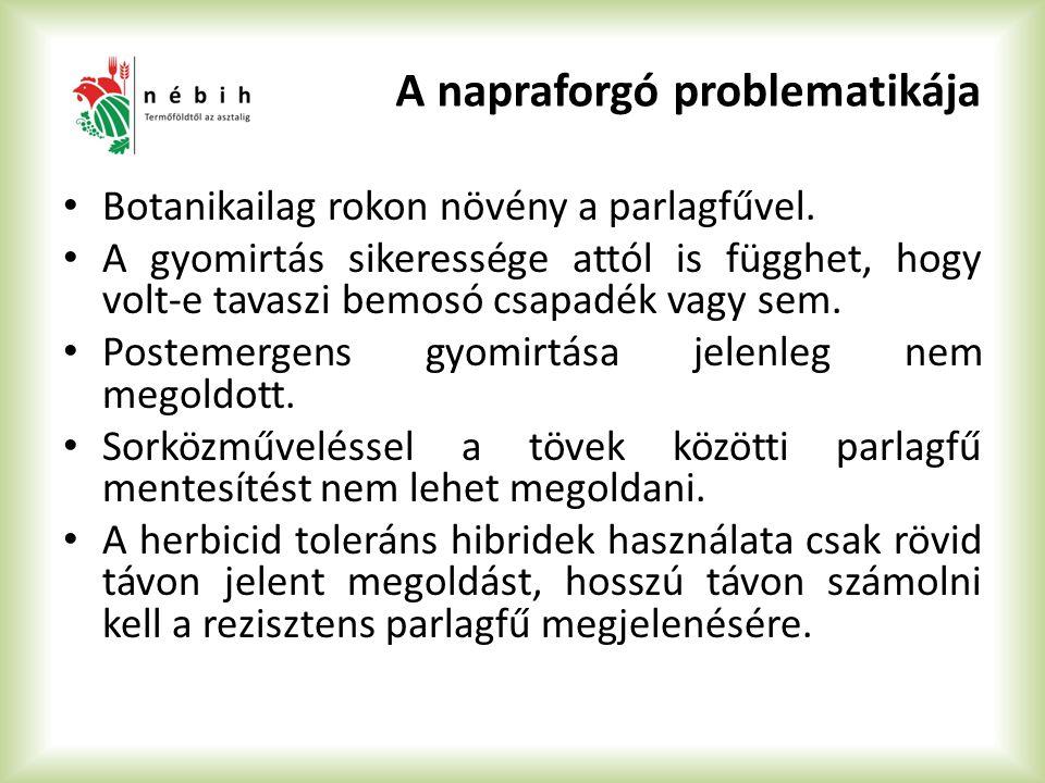 A napraforgó problematikája Botanikailag rokon növény a parlagfűvel. A gyomirtás sikeressége attól is függhet, hogy volt-e tavaszi bemosó csapadék vag