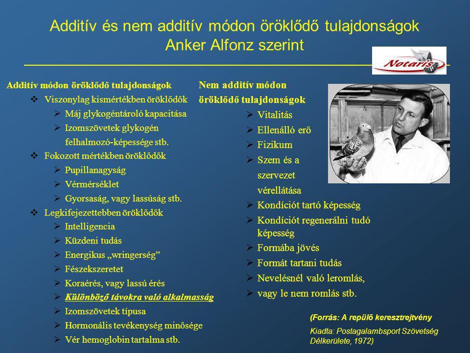 Additív és nem additív módon öröklődő tulajdonságok Anker Alfonz szerint Additív módon öröklődő tulajdonságok  Viszonylag kismértékben öröklődők  Má
