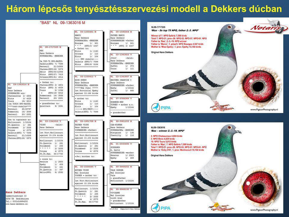 Három lépcsős tenyésztésszervezési modell a Dekkers dúcban