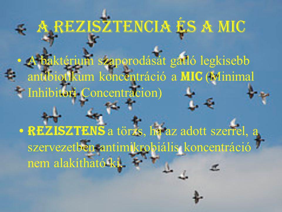 A rezisztencia és a MIC A baktérium szaporodását gátló legkisebb antibiotikum koncentráció a MIC (Minimal Inhibitori Concentracion) Rezisztens a törzs