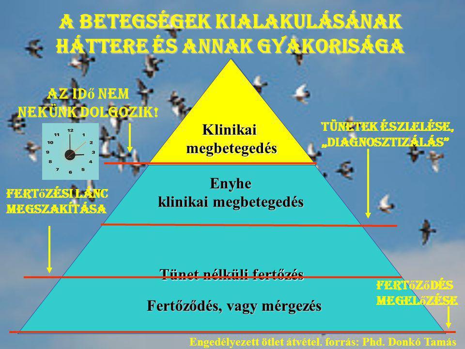 Tünet nélküli fertőzés Klinikaimegbetegedés Enyhe klinikai megbetegedés Fertőződés, vagy mérgezés A betegségek kialakulásának háttere és annak gyakori