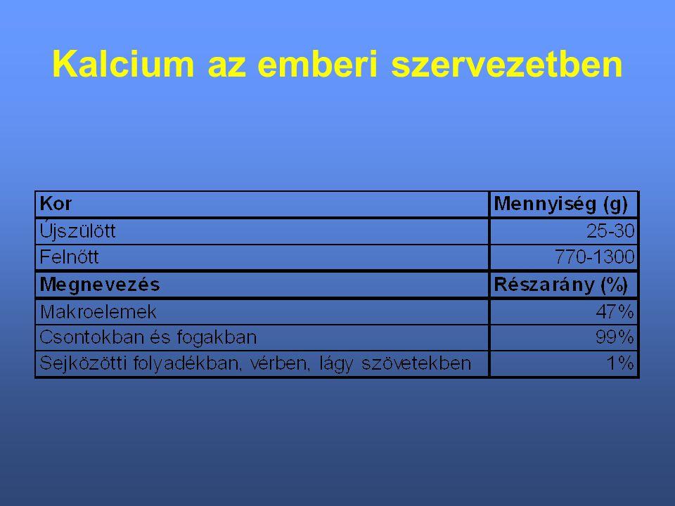 Kalcium az emberi szervezetben