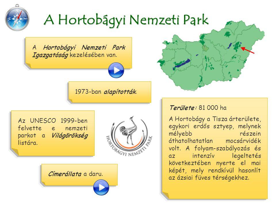 Területe: 81 000 ha A Hortobágy a Tisza árterülete, egykori erdős sztyep, melynek mélyebb részein áthatolhatatlan mocsárvidék volt.