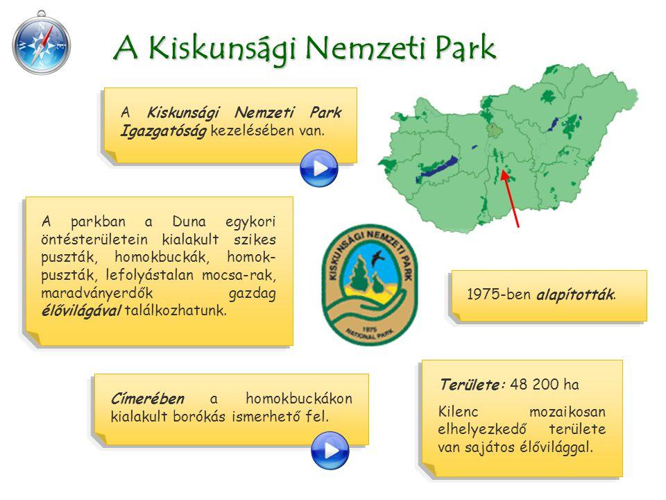 Területe: 48 200 ha Kilenc mozaikosan elhelyezkedő területe van sajátos élővilággal. A Kiskunsági Nemzeti Park A Kiskunsági Nemzeti Park Igazgatóság k