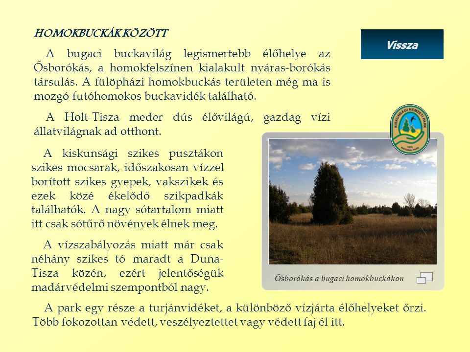Ősborókás a bugaci homokbuckákon HOMOKBUCKÁK KÖZÖTT A bugaci buckavilág legismertebb élőhelye az Ősborókás, a homokfelszínen kialakult nyáras-borókás társulás.