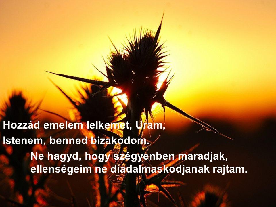 Hozzád emelem lelkemet, Uram, Istenem, benned bizakodom. Ne hagyd, hogy szégyenben maradjak, ellenségeim ne diadalmaskodjanak rajtam.