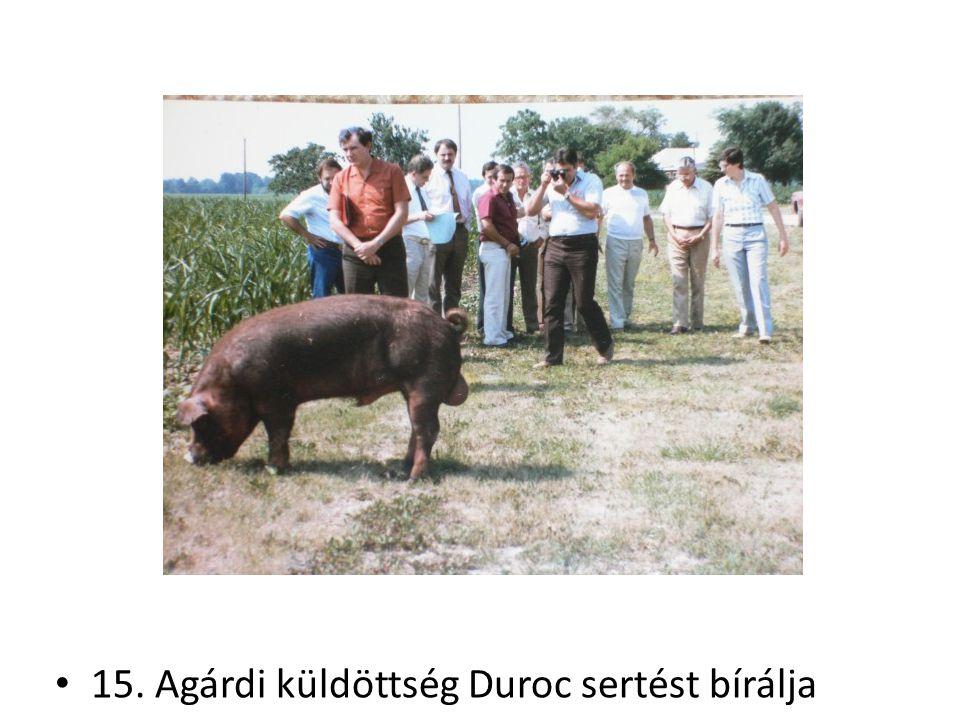 15. Agárdi küldöttség Duroc sertést bírálja