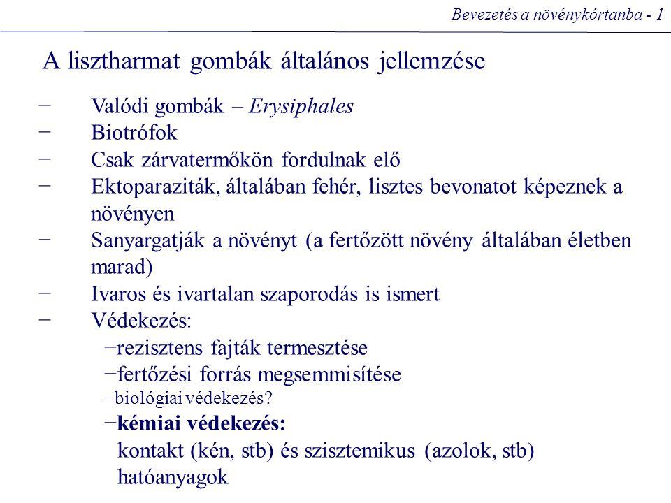 A lisztharmat gombák általános jellemzése Bevezetés a növénykórtanba - 1 −Valódi gombák – Erysiphales −Biotrófok −Csak zárvatermőkön fordulnak elő −Ektoparaziták, általában fehér, lisztes bevonatot képeznek a növényen −Sanyargatják a növényt (a fertőzött növény általában életben marad) −Ivaros és ivartalan szaporodás is ismert −Védekezés: −rezisztens fajták termesztése −fertőzési forrás megsemmisítése −biológiai védekezés.