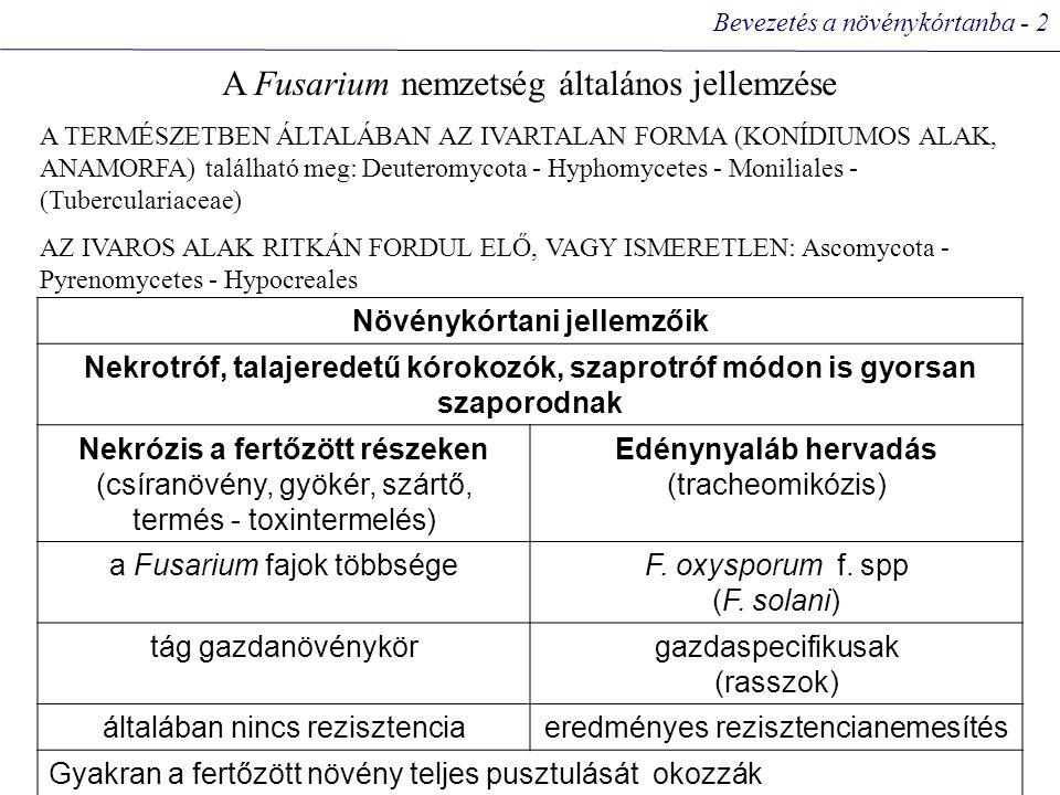Bevezetés a növénykórtanba - 2 A Fusarium nemzetség általános jellemzése A TERMÉSZETBEN ÁLTALÁBAN AZ IVARTALAN FORMA (KONÍDIUMOS ALAK, ANAMORFA) található meg: Deuteromycota - Hyphomycetes - Moniliales - (Tuberculariaceae) AZ IVAROS ALAK RITKÁN FORDUL ELŐ, VAGY ISMERETLEN: Ascomycota - Pyrenomycetes - Hypocreales Növénykórtani jellemzőik Nekrotróf, talajeredetű kórokozók, szaprotróf módon is gyorsan szaporodnak Nekrózis a fertőzött részeken (csíranövény, gyökér, szártő, termés - toxintermelés) Edénynyaláb hervadás (tracheomikózis) a Fusarium fajok többségeF.