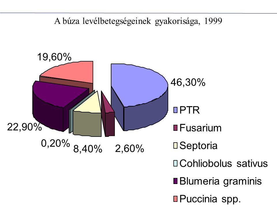 A búza levélbetegségeinek gyakorisága, 1999 46,30% 2,60% 0,20% 22,90% 19,60% 8,40% PTR Fusarium Septoria Cohliobolus sativus Blumeria graminis Puccini