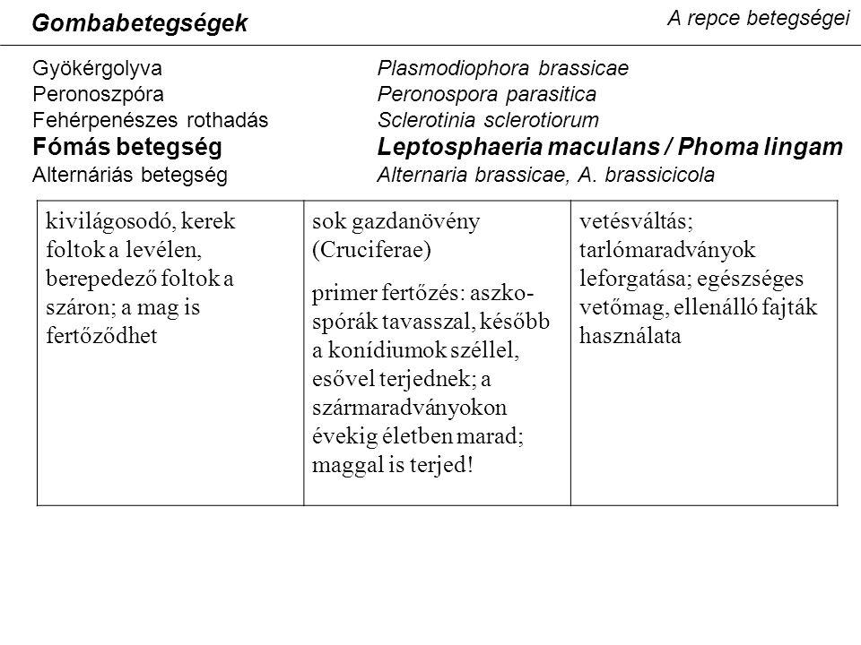 A repce betegségei GyökérgolyvaPlasmodiophora brassicae PeronoszpóraPeronospora parasitica Fehérpenészes rothadásSclerotinia sclerotiorum Fómás betegségLeptosphaeria maculans / Phoma lingam Alternáriás betegségAlternaria brassicae, A.
