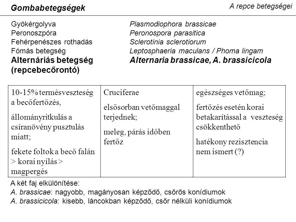 A repce betegségei GyökérgolyvaPlasmodiophora brassicae PeronoszpóraPeronospora parasitica Fehérpenészes rothadásSclerotinia sclerotiorum Fómás betegs