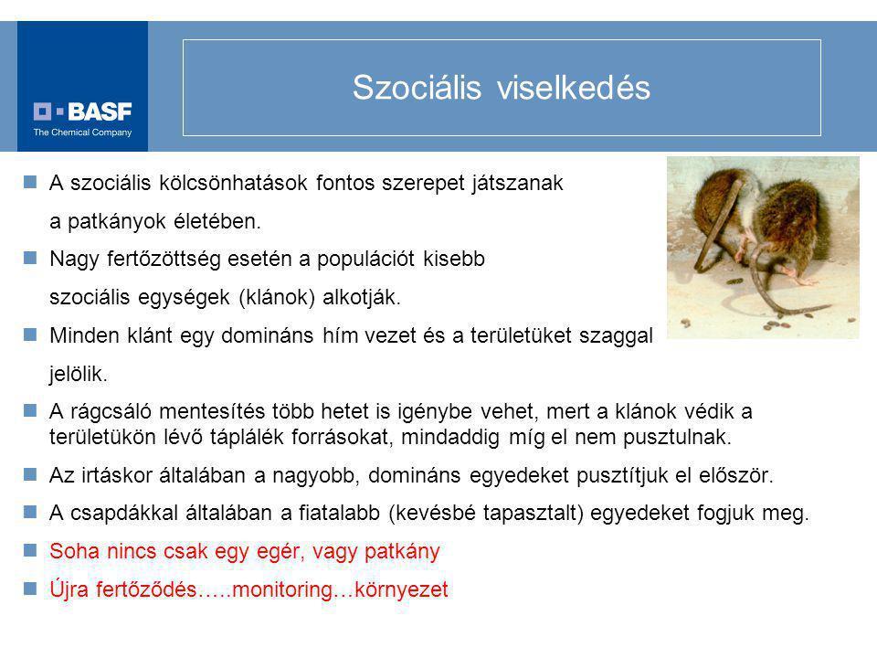 Szociális viselkedés A szociális kölcsönhatások fontos szerepet játszanak a patkányok életében. Nagy fertőzöttség esetén a populációt kisebb szociális