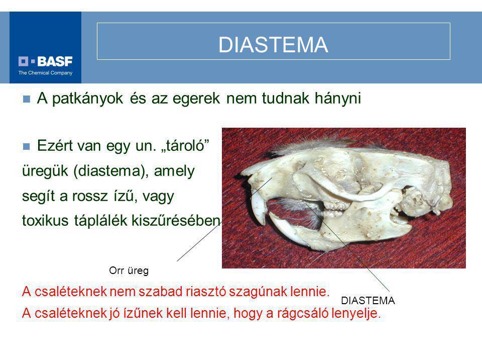 """DIASTEMA A patkányok és az egerek nem tudnak hányni Ezért van egy un. """"tároló"""" üregük (diastema), amely segít a rossz ízű, vagy toxikus táplálék kiszű"""