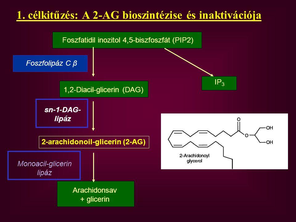 Foszfatidil-etanolamin (PE) NAPE-PLD N-acil-transzferáz Anandamid Zsírsavamid-hidroláz (FAAH) zsírsav + etanolamin 2.