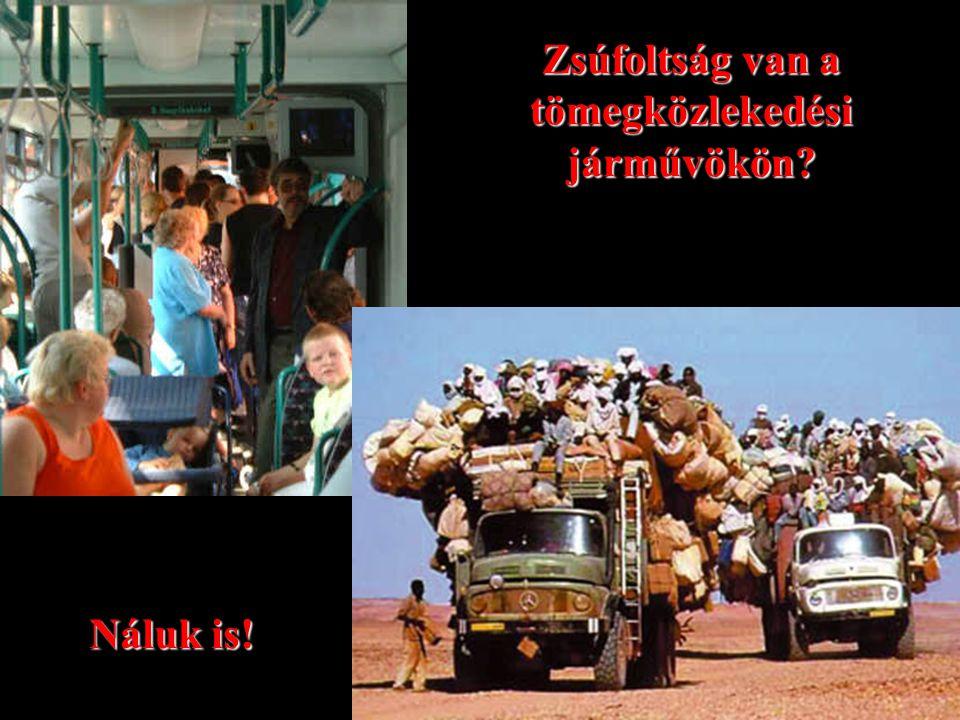 Zsúfoltság van a tömegközlekedési járművökön? Náluk is!
