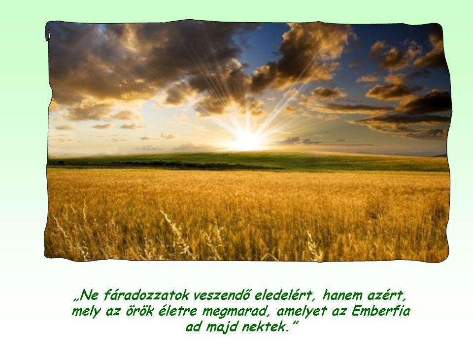 Csak csodatevőt, földi messiást láttak benne, aki bőséges és olcsó földi táplálékot tud biztosítani számukra. Jézus ekkor intézte hozzájuk ezeket a sz