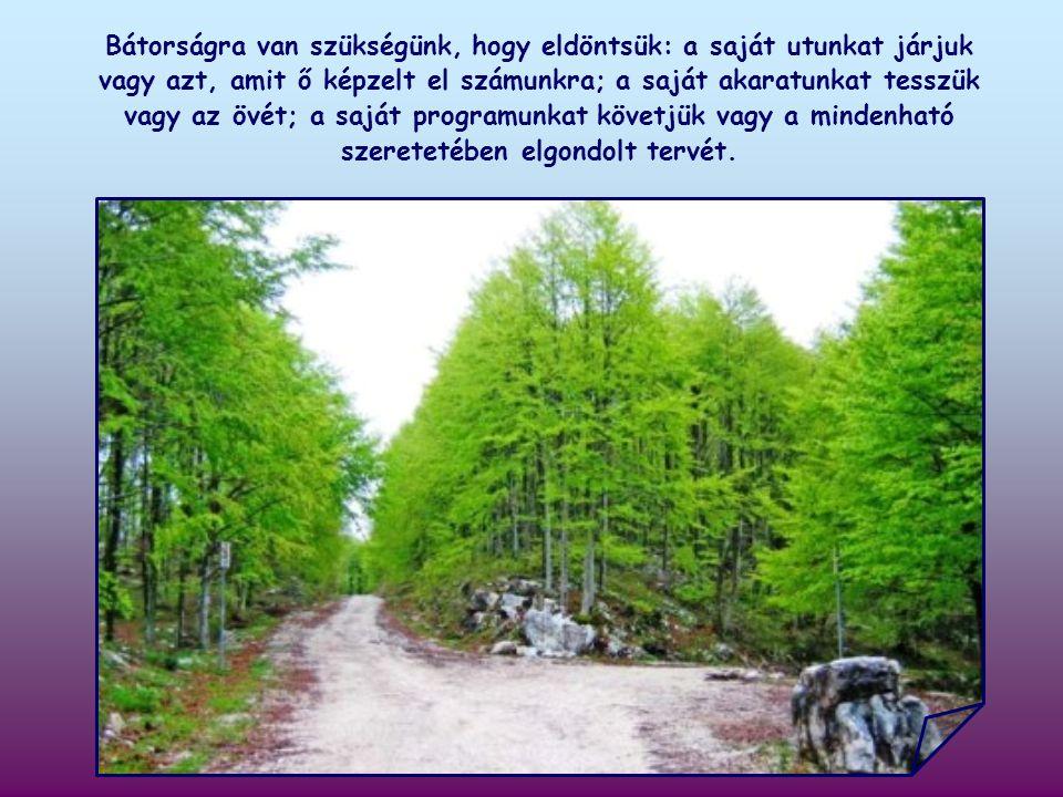 Elő kell készíteni számára az utat, egymás után hárítva el azokat az akadályokat, amelyek abból fakadnak, hogy szűk a látókörünk és gyenge az akaratunk.