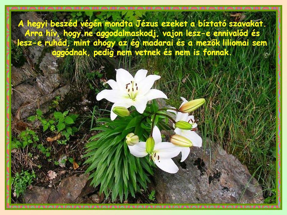 A hegyi beszéd végén mondta Jézus ezeket a bíztató szavakat.