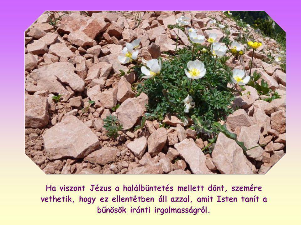 Ha ugyanis Jézus a megkövezés ellen szól, úgy megvádolhatják, hogy szembeszegül a törvénnyel, amely szerint a népnek meg kell köveznie a bűnöst, és az