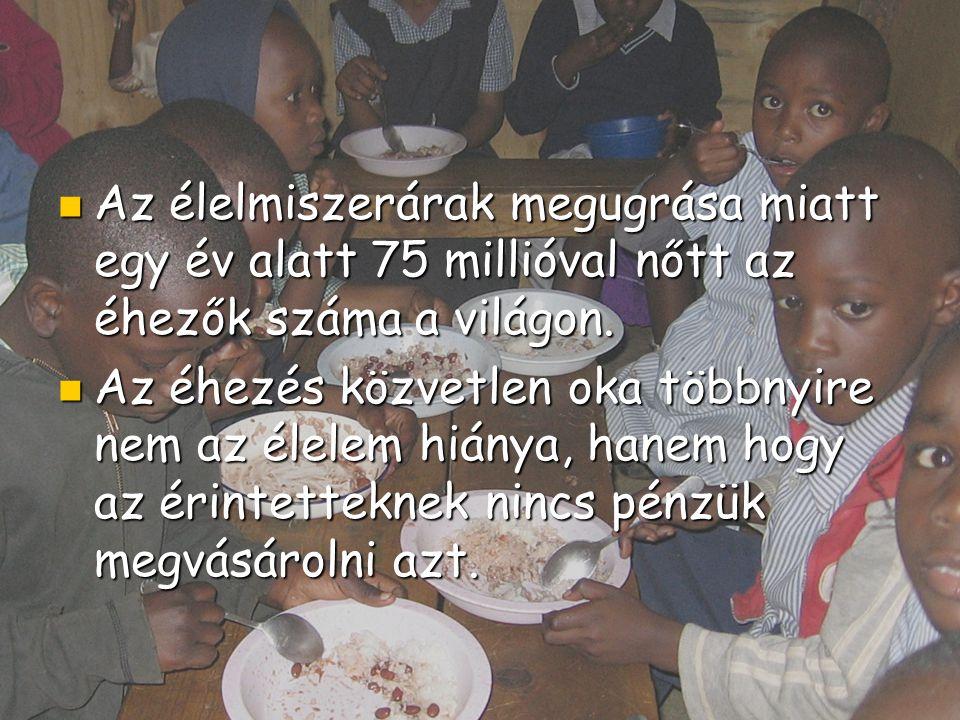 Az élelmiszerárak megugrása miatt egy év alatt 75 millióval nőtt az éhezők száma a világon. Az élelmiszerárak megugrása miatt egy év alatt 75 millióva