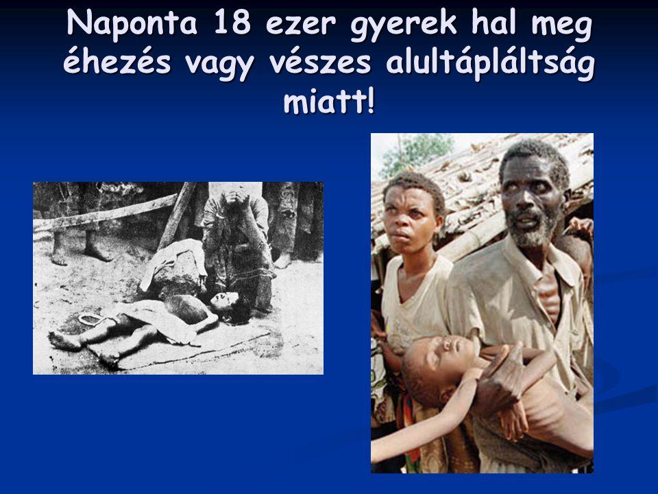 Naponta 18 ezer gyerek hal meg éhezés vagy vészes alultápláltság miatt!