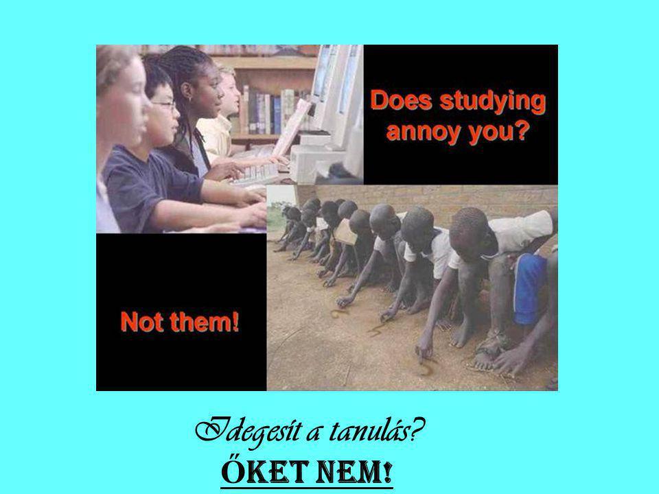 Idegesít a tanulás? Ő KET NEM!