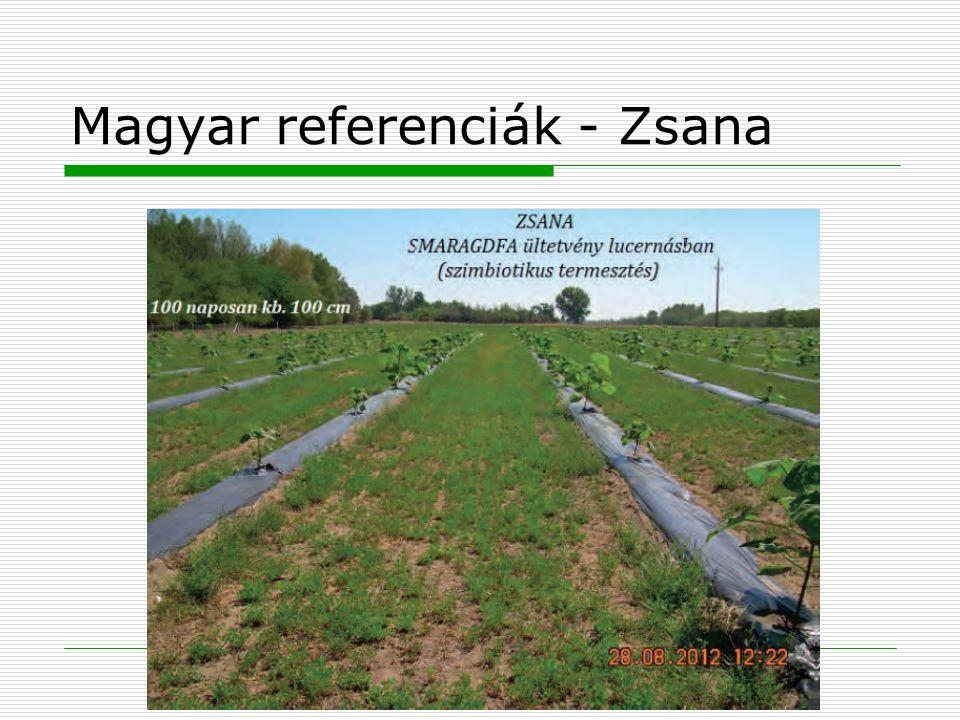 Magyar referenciák - Zsana