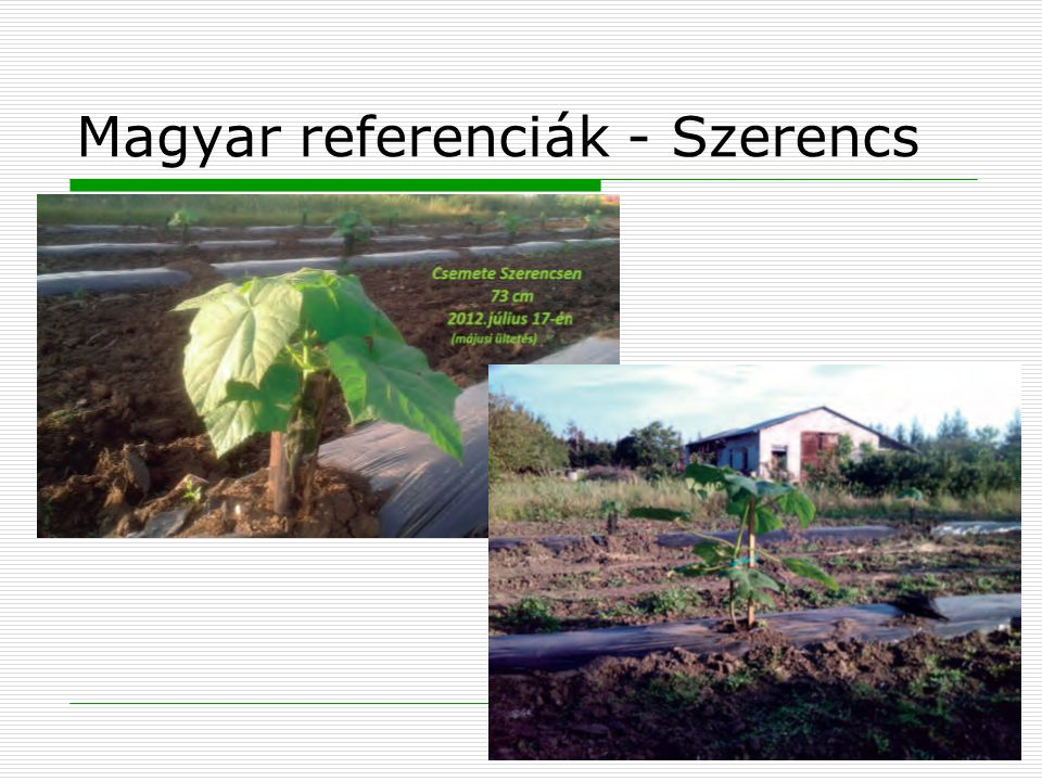 Magyar referenciák - Szerencs