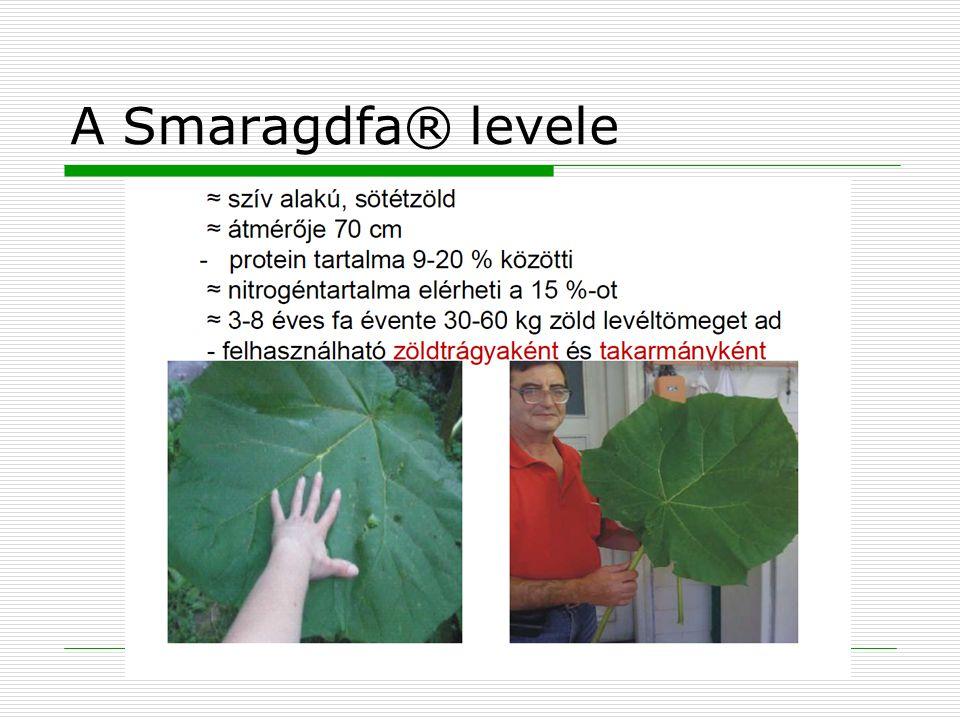 A Smaragdfa® levele