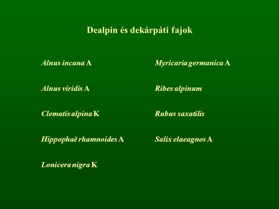 Dealpin és dekárpáti fajok Alnus incana AMyricaria germanica A Alnus viridis ARibes alpinum Clematis alpina KRubus saxatilis Hippophaë rhamnoides ASal