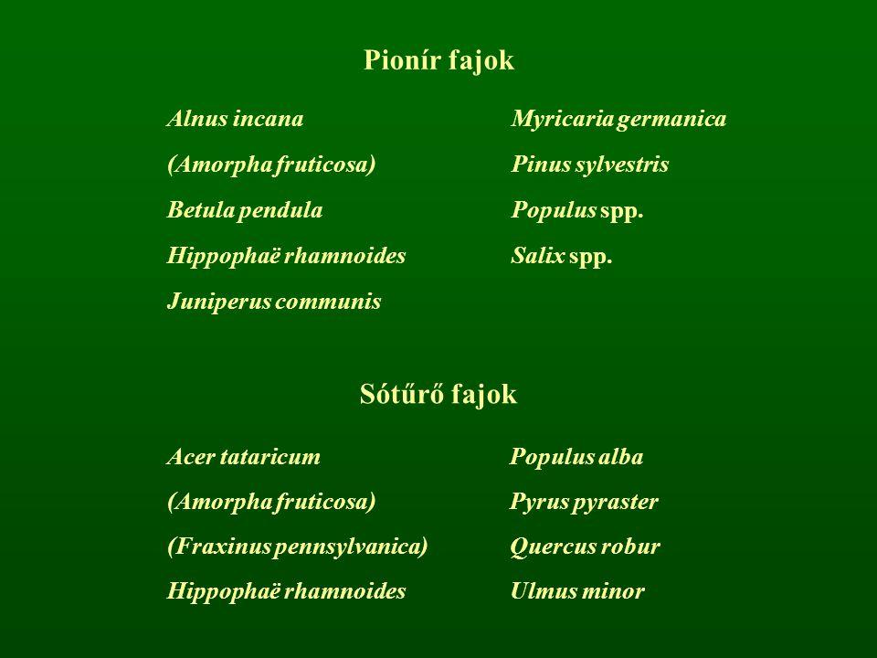 Pionír fajok Alnus incanaMyricaria germanica (Amorpha fruticosa)Pinus sylvestris Betula pendulaPopulus spp. Hippophaë rhamnoidesSalix spp. Juniperus c