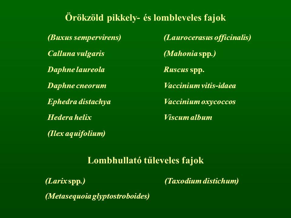 Örökzöld pikkely- és lombleveles fajok (Buxus sempervirens)(Laurocerasus officinalis) Calluna vulgaris(Mahonia spp.) Daphne laureolaRuscus spp. Daphne
