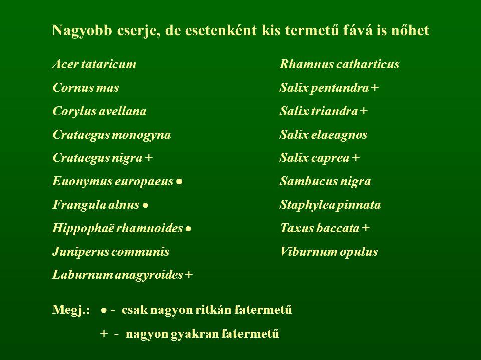 Nagyobb cserje, de esetenként kis termetű fává is nőhet Acer tataricumRhamnus catharticus Cornus masSalix pentandra + Corylus avellanaSalix triandra +