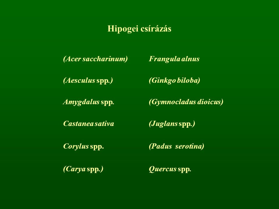 Hipogei csírázás (Acer saccharinum)Frangula alnus (Aesculus spp.)(Ginkgo biloba) Amygdalus spp.(Gymnocladus dioicus) Castanea sativa(Juglans spp.) Cor