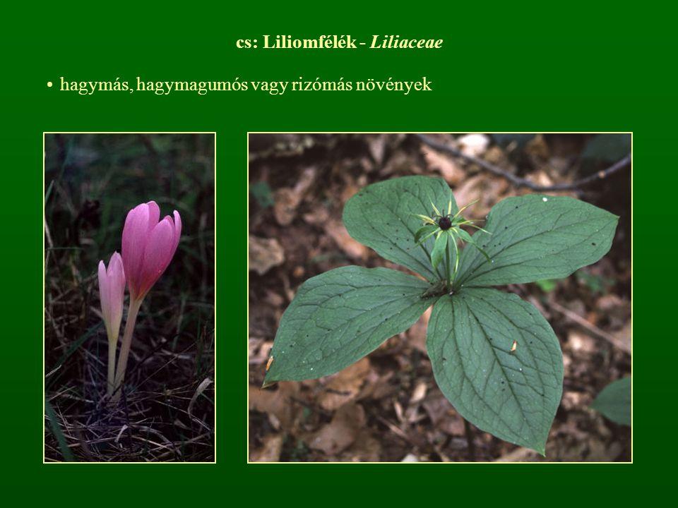 cs: Liliomfélék - Liliaceae hagymás, hagymagumós vagy rizómás növények