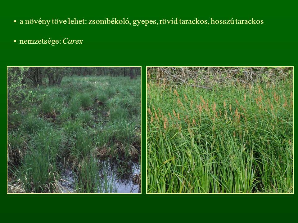 a növény töve lehet: zsombékoló, gyepes, rövid tarackos, hosszú tarackos nemzetsége: Carex