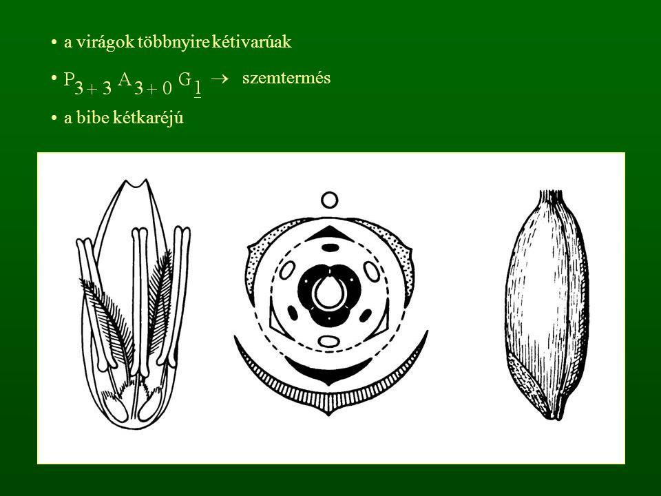 a virágok többnyire kétivarúak  szemtermés a bibe kétkaréjú