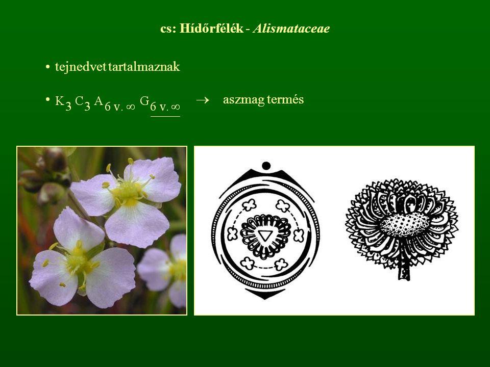cs: Hídőrfélék - Alismataceae tejnedvet tartalmaznak  aszmag termés