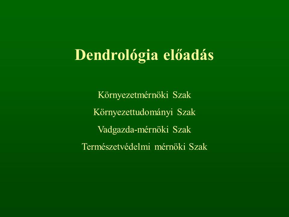 Dendrológia előadás Környezetmérnöki Szak Környezettudományi Szak Vadgazda-mérnöki Szak Természetvédelmi mérnöki Szak
