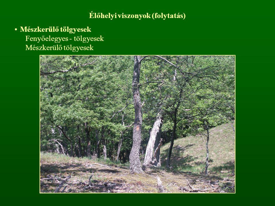 Élőhelyi viszonyok (folytatás) Mészkerülő tölgyesek Fenyőelegyes - tölgyesek Mészkerülő tölgyesek
