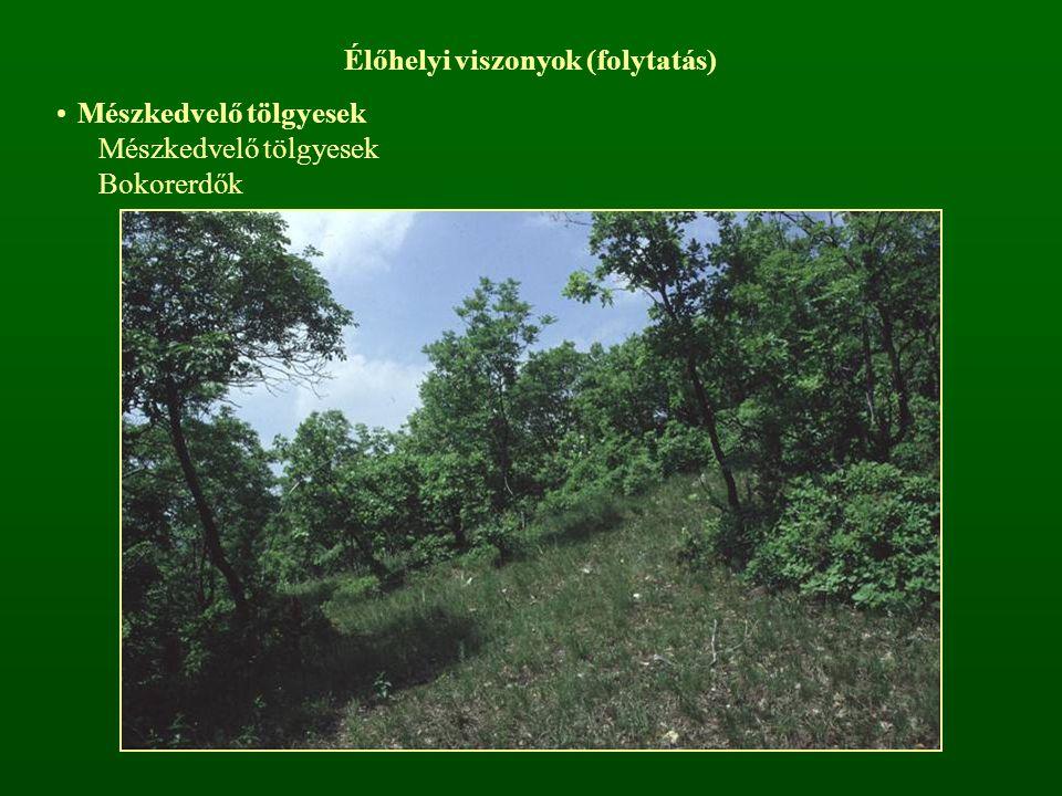 Élőhelyi viszonyok (folytatás) Mészkedvelő tölgyesek Bokorerdők