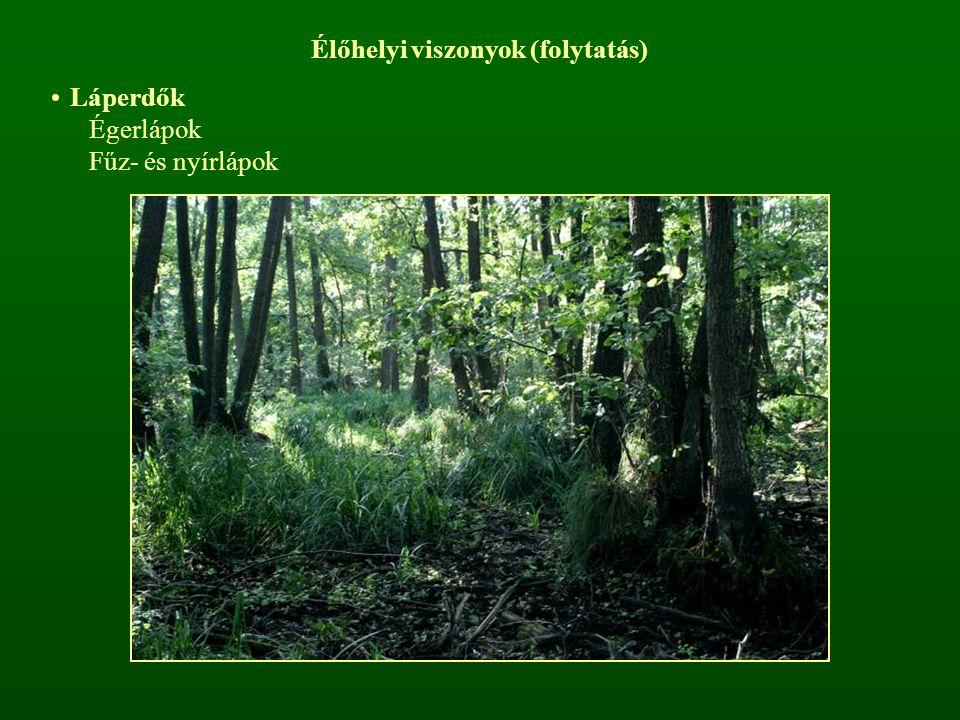Élőhelyi viszonyok (folytatás) Láperdők Égerlápok Fűz- és nyírlápok