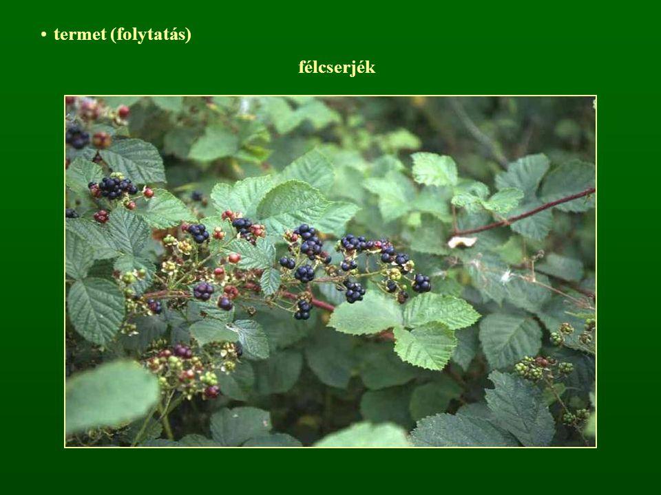 Előfordulás (Magyarországra vetítve) Populus nigra L. – Fekete nyár
