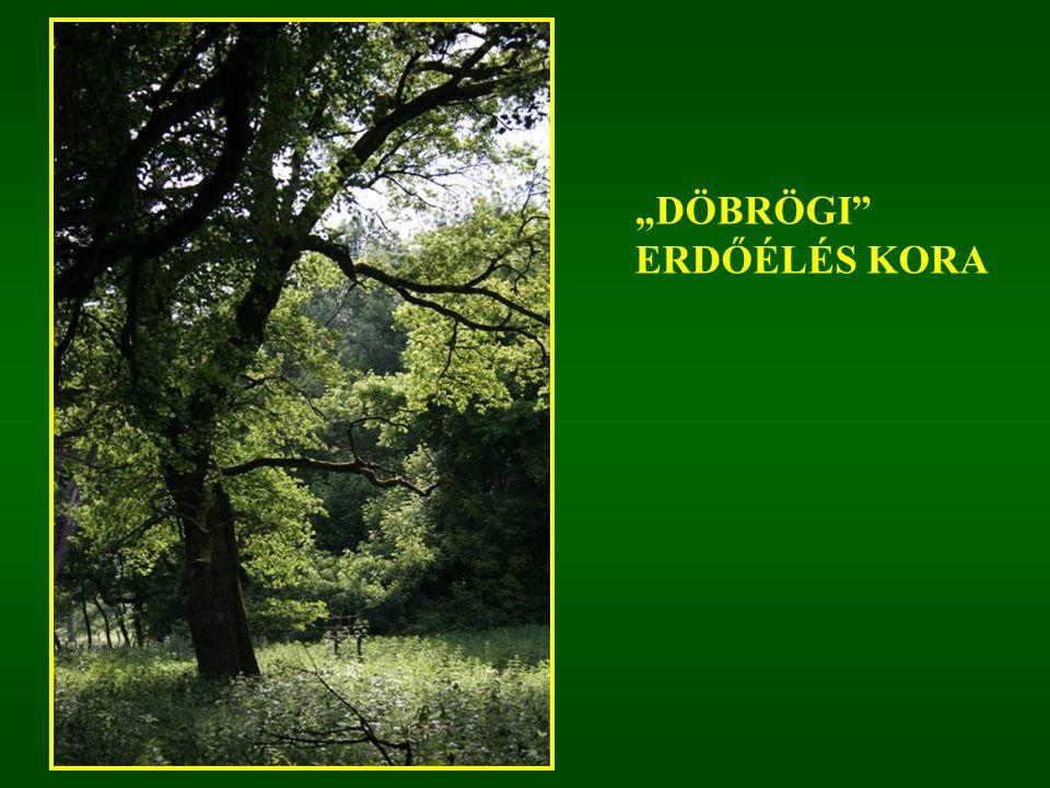 """""""DÖBRÖGI"""" ERDŐÉLÉS KORA"""