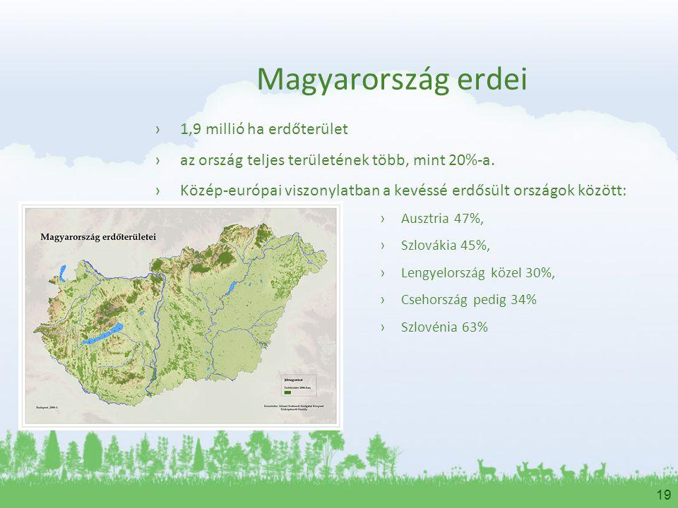 19 Magyarország erdei ›1,9 millió ha erdőterület ›az ország teljes területének több, mint 20%-a. ›Közép-európai viszonylatban a kevéssé erdősült orszá