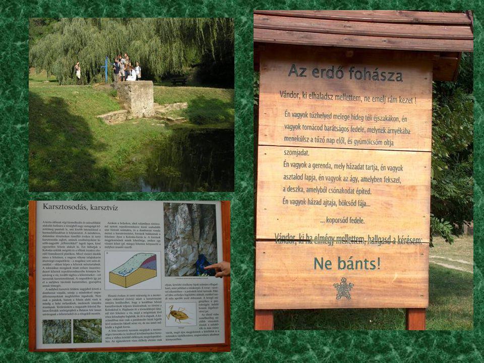 2004. 09. 08. szerda 1. Koloska-völgyi tanösvény (Balatonarács) megtekintése 2. Környezetvédelmi laboratóriumi látogatás (ELGOSCAR-2000 Kft, Balatonfű