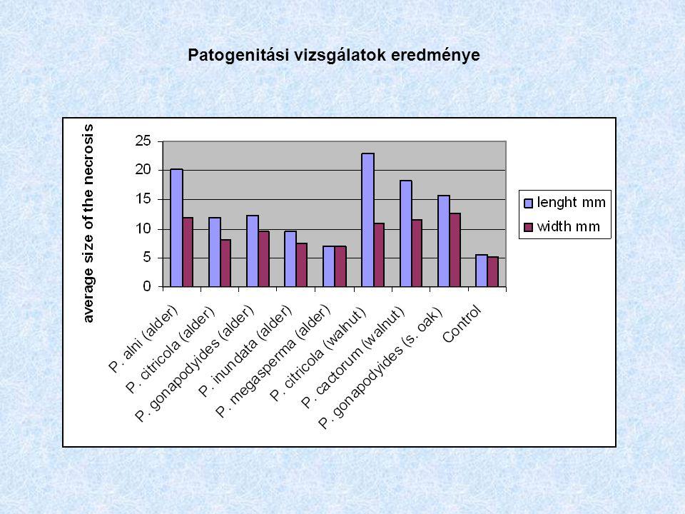 Patogenitási vizsgálatok eredménye